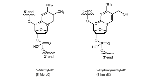 5-Methyl-2'deoxycytidine (5-Me-dC)- and 5-Hydroxymethyl-2'deoxycytidine (5-hm-dC)