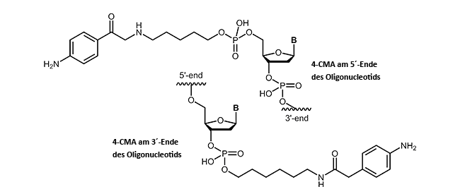 4-Carboxymethylanilin (4-CMA) am 3´- oder 5´-Ende eines Oligonucleotids